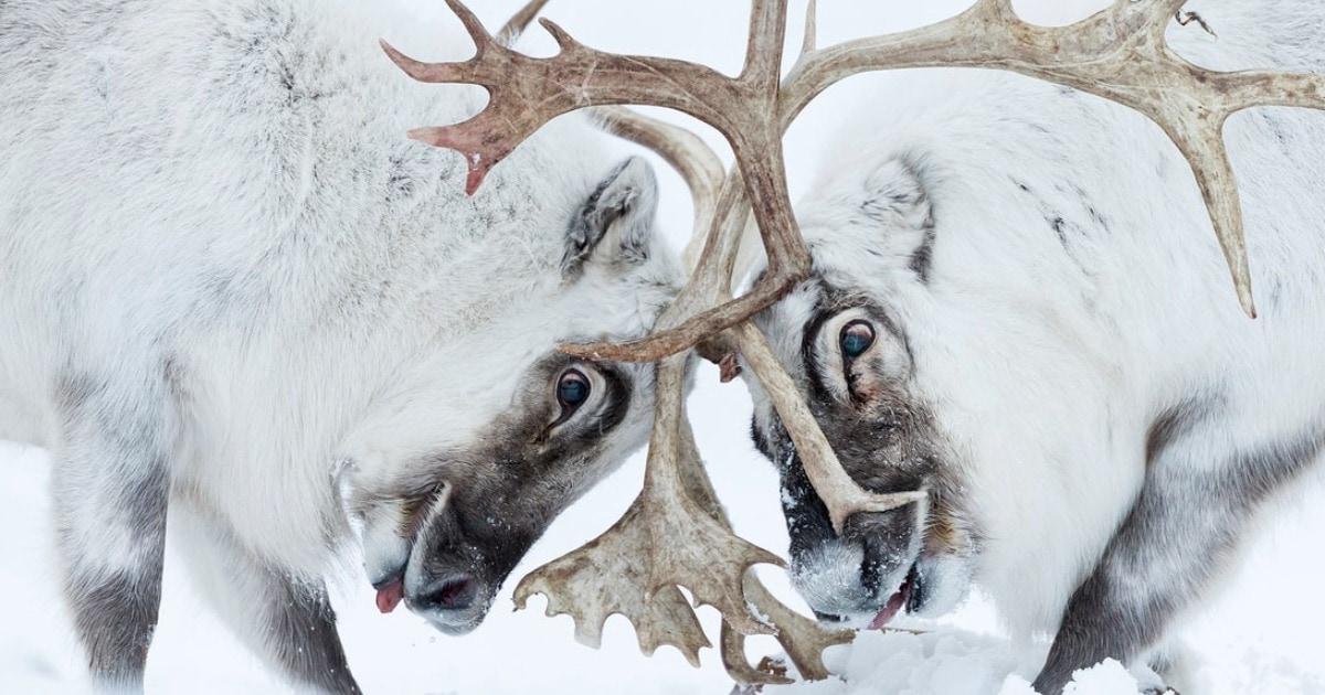 17 снимков с конкурса фотографий дикой природы, которые стали лучшими в 2021 году