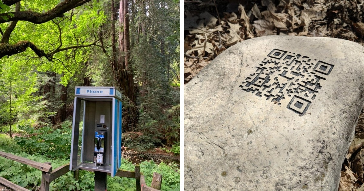 15 загадочных случаев, когда люди находили в лесу вещи и задавались вопросом «откуда они там взялись?»